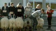 Despre oameni şi oi / Hrútar (Islanda, 2015) - trailer