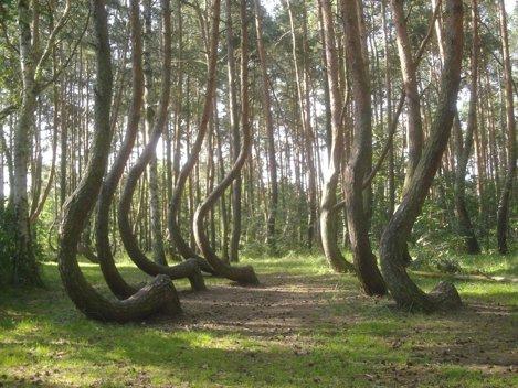 Pădurea Crooked din Polonia