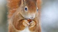 Nu doar oamenii adoră luminiţele de Crăciun ci şi...veveriţele!