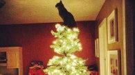 Pisicile chiar iubesc Crăciunul :)