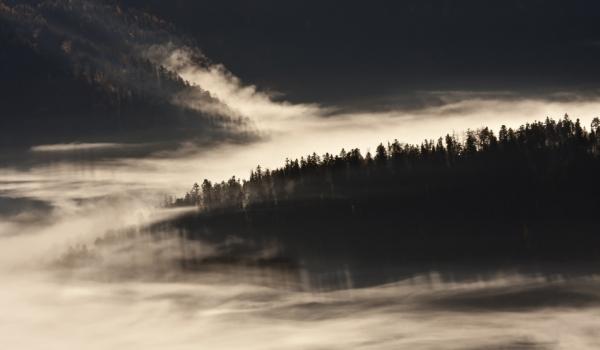 Pădurile seculare de brazi din Munţii Vosgi