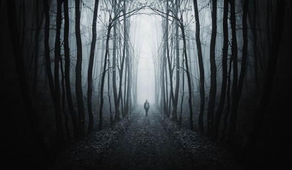 Pădure misterioasă.