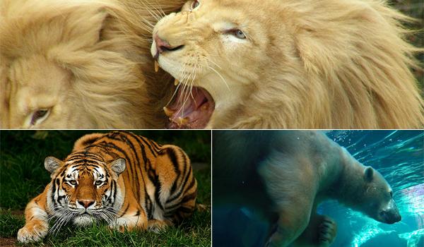 Cele mai frumoase gradini zoologice ale Europei