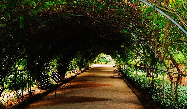 Cele mai mari gradini botanice si muzee de istorie naturala din lume