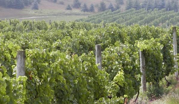 Drumul vinului în 10 destinaţii viticole