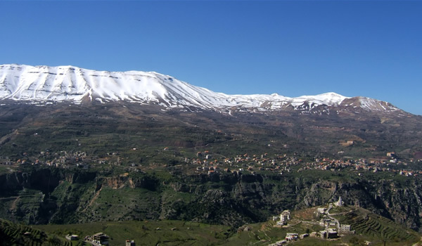 Cedrii Libanului – codrii biblici de odinioară