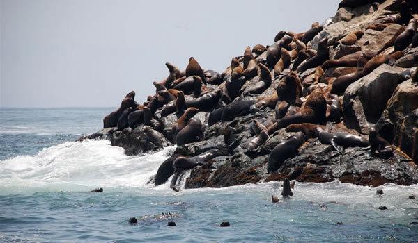 Printre leii de mare ai Insulelor Palomino