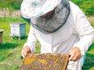 Tinerii au găsit secretul afacerii la sat: apicultura sau plantaţii de flori