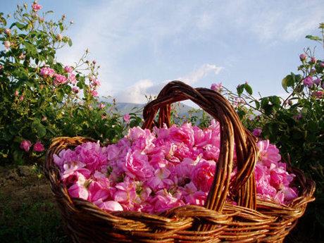 Valea Trandafirilor Bulgaria