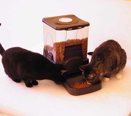 Hranitor automat pentru pisici