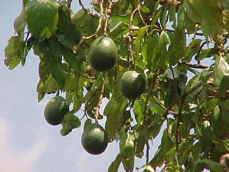 7 motive să consumi avocado în fiecare zi