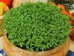 10 superalimente sănătoase şi gustoase, bogate în nutrienţi