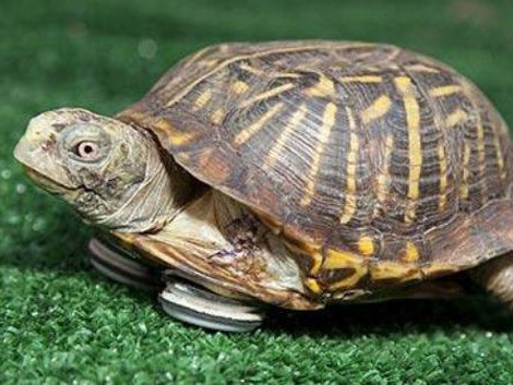 Vis ţestoasă. Ce înseamnă când visezi ţestoasă