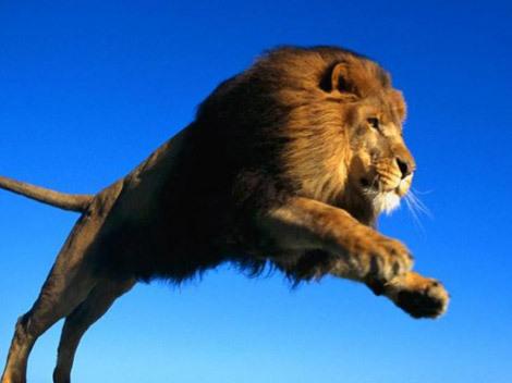 Vis leu. Ce înseamnă când visezi un leu