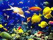 Cum pot peştii să miroasă obiecte?