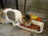 Pot animalele simţi gustul?