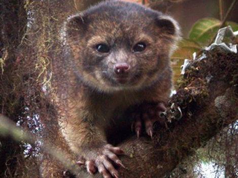 Savanţii americani au descoperit o nouă specie de mamifere