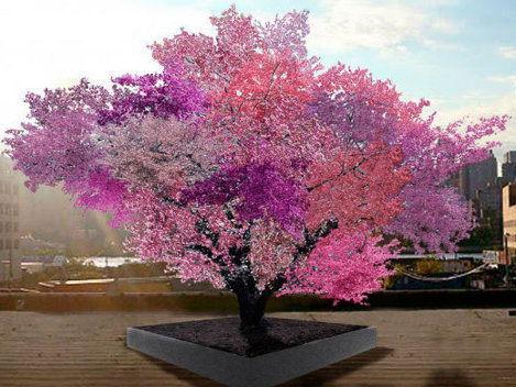 40 de fructe într-un singur copac