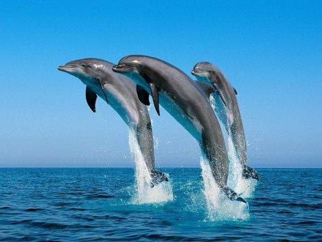 36 de curiozit??i despre delfini