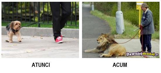 Animal de companie