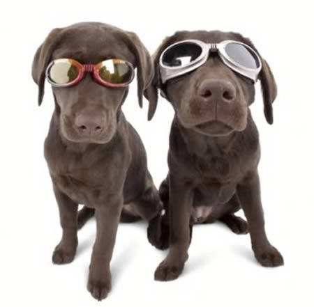 Ochelarii pentru animale