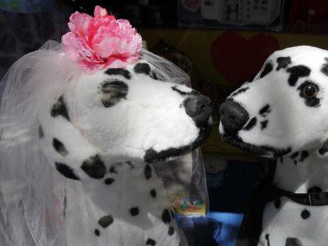 O femeie organizează nuntă de 250.000 $ pentru caţeluşa ei