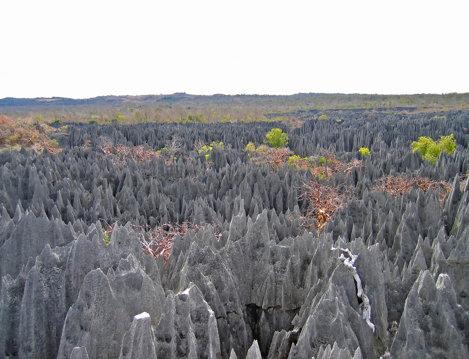 Pădurea de piatră, Madagascar