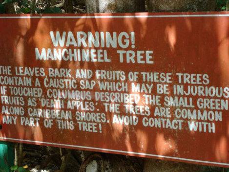 Manchineel - Cel mai toxic copac din lume  (Video)