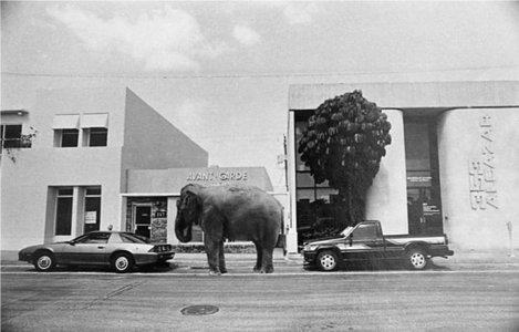 În Florida, dacă-ţi parchezi elefantul plăteşti aceeaşi taxă ca la o maşină