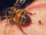 Cele mai dureroase locuri în care te poate înţepa o albină