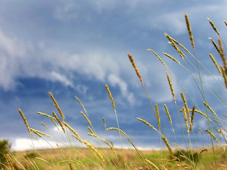 Cum va fi vremea până pe 3 august 2014