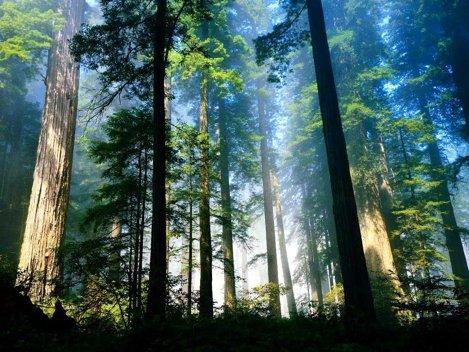 Contribuie la schimbarile climatice, prin amprenta de carbon anuala!