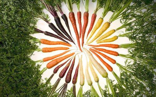 morcovi multicolori