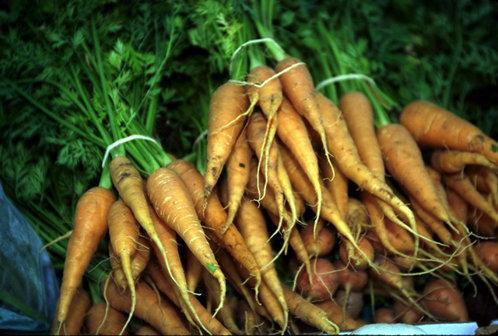 morcovii asa cum ii cunoastem azi