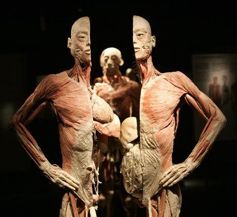 The Human Body Muzeul Antipa