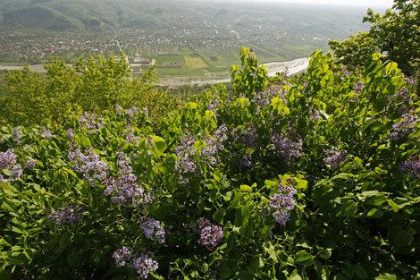 Dealul cu Lilieci Cernățești, Buzau, foto: MediafaxFoto