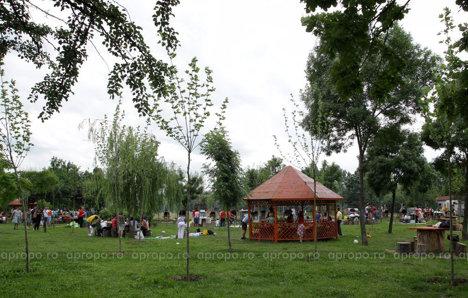Locul pentru picnic este inconjurat de multa verdeata