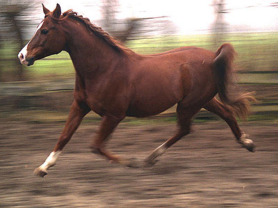TOP 3: Cele mai tari lovituri primite de omenire, de la cai! (Video)