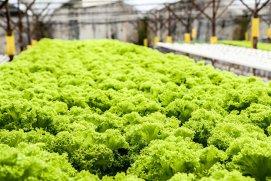 Prima fermă robotizată din lume va fi deschisă în Japonia