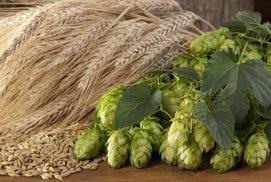 Hameiul din bere ar putea ajuta la vindecarea cancerului şi a altori boli