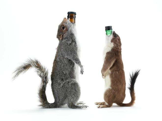 Una dintre cele mai scumpe beri din lume este servită într-o veveriţă împăiată