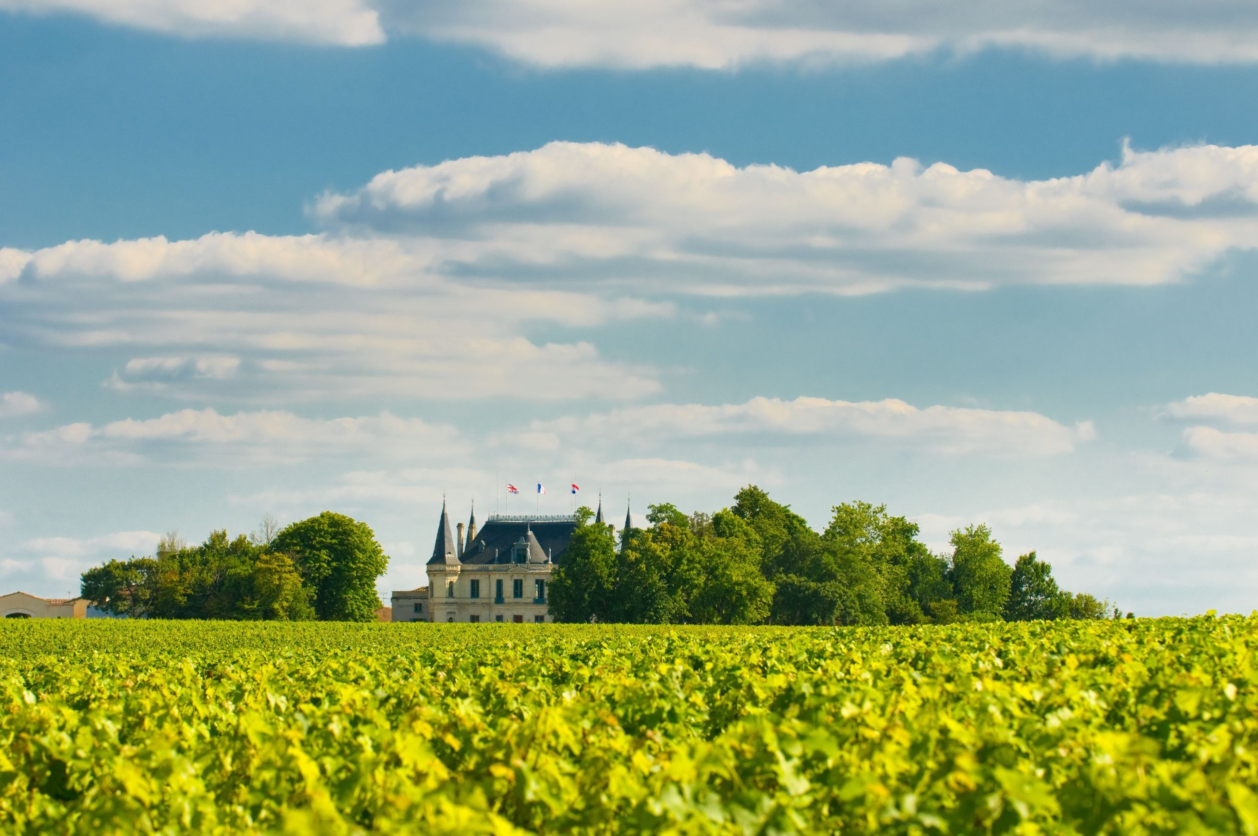 Preţul vinurilor de Bordeaux va creşte cu până la 60%