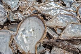 Cea mai mare perlă din lume, descoperită de un pescar. Valoarea, estimată la 100 de milioane de dolari