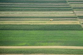 România, locul 9 în UE în ceea ce priveşte suprafaţa agricolă cultivată organic