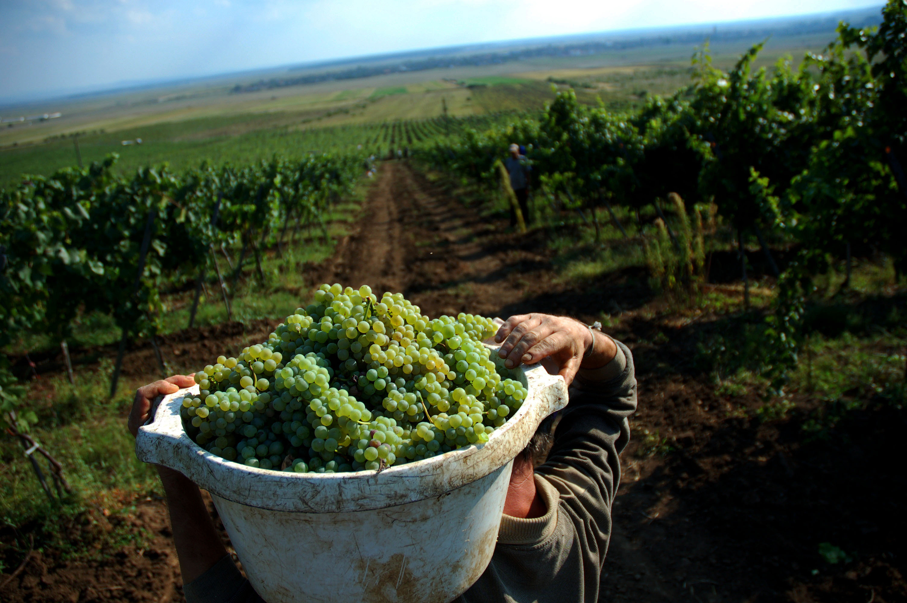 Cârstovul viilor, la Muzeul Satului: tainele viţei-de-vie şi ale vinului