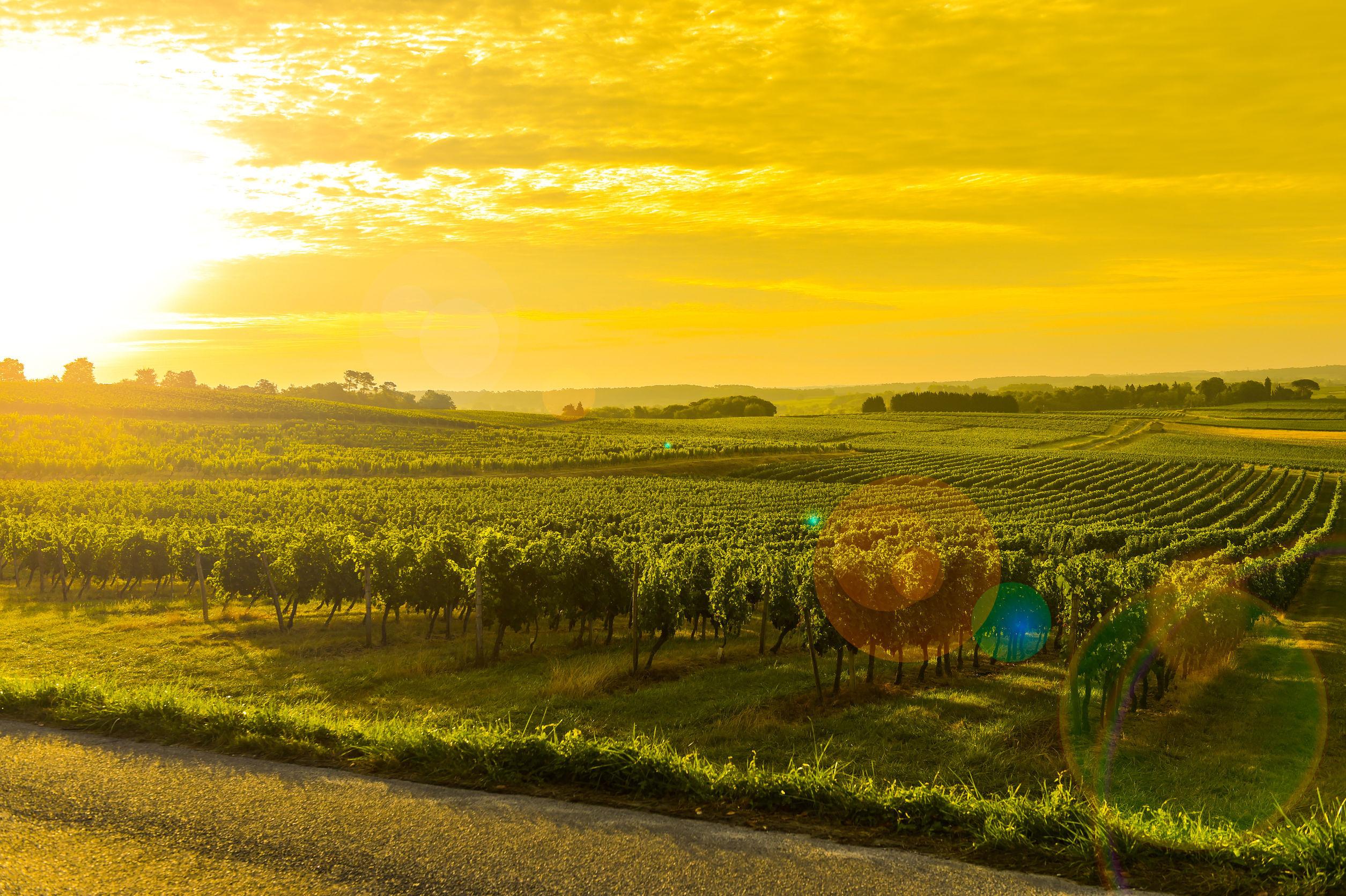 Chinezii cumpără Bordeaux bucată cu bucată. Vinăriile, cele mai căutate