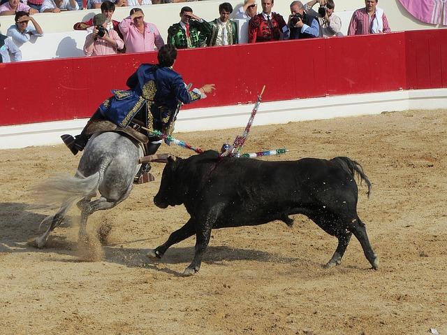 Taurii folosiţi în coride ar putea deveni noua delicateţă a Spaniei