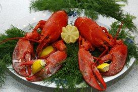 În Elveţia a devenit ilegal să fierbi crustaceele vii