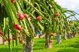 Exotice şi savuroase. Secretele celor mai rare fructe din lume