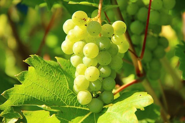 Metoda inedită de a răci vinul: boabe de struguri congelate